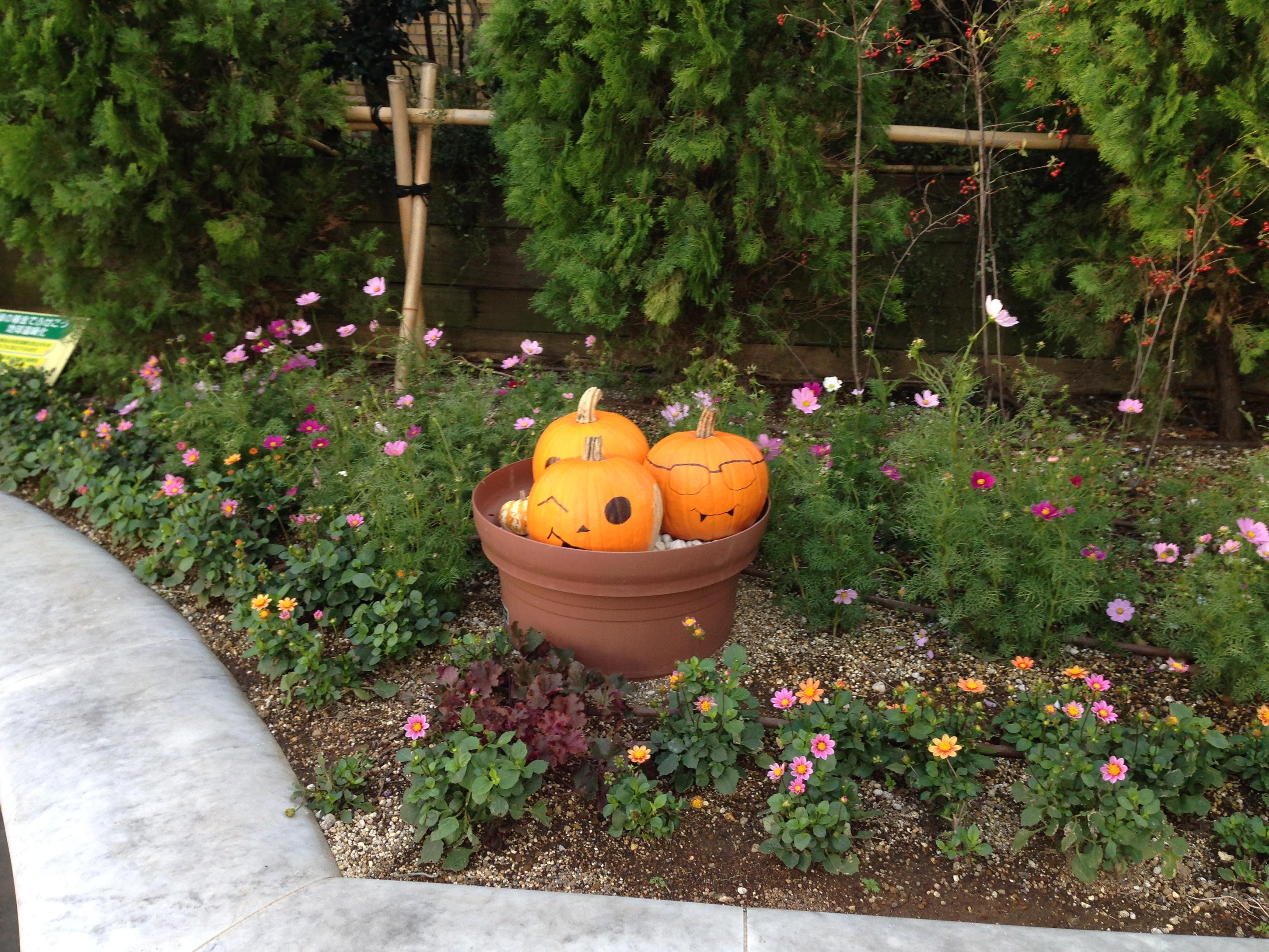 Tokyo pumpkins